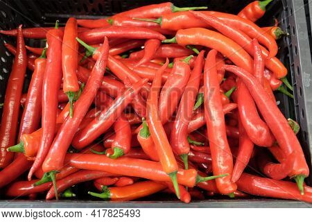Still Life With Lot Of Long Ripe Red Chili Peppers Inside Black Plastic Box In The Vegetable Departm