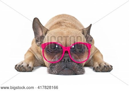 Dog With Sunglasses. Funny French Bulldog Relaxing While Wearing Colorful Sunglasses Isolated On Whi