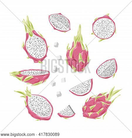 Dragon Fruit Vector Drawing Big Set. Hand Drawn Tropical Food Illustration. Pink Summer Dragonfruit.