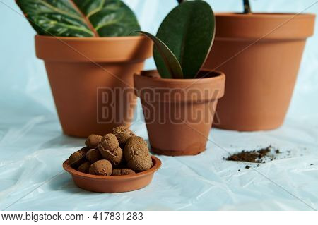 A Slide Of Expanded Clay In A Clay Tray From A Flower Pot Against The Background Of Planted Indoor P