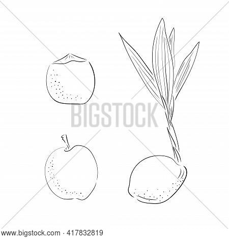 New Born Coconut. Set. Vector Illustration Of A Nut. Sprout And The Beginning Of Life Of A Tree In T