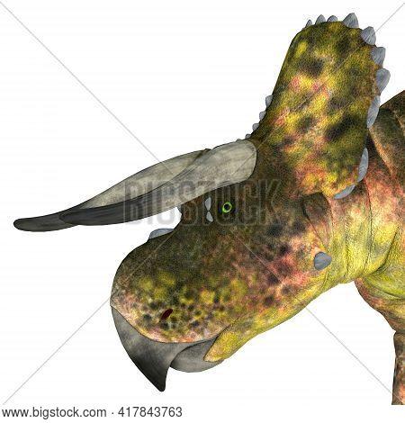 Nasutoceratops Dinosaur Head 3d Illustration - Nasutoceratops Was A Herbivorous Ceratopsid Dinosaur