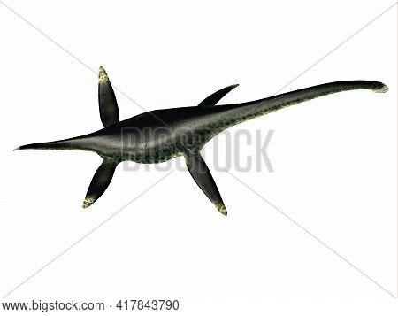 Styxosaurus Reptile Back 3d Illustration - Styxosaurus Was A Predatory Marine Plesiosaur Reptile Tha
