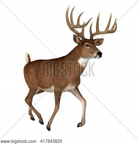 Whitetail Buck Trotting 3d Illustration - The Whitetail Deer Is A Herbivorous Ruminant Mammal That L