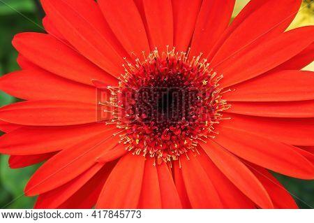 An Optical Illusion Of A 3d Gerbera Flower.