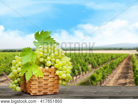 Grape in basket on wooden table in front of landscape of vineyard. Sunny summer day. French countryside valley