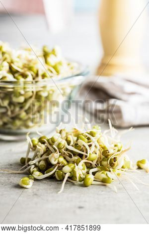 Sprouted green mung beans. Mung sprouts on kitchen table.
