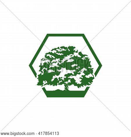 Oak Tree Logo Design Vector Illustration, Creative Oak Tree Logo Design Concept Template, Symbols Ic