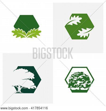 Set Of Oak Leaf Logo Design Vector Illustration, Creative Oak Tree Logo Design Concept Template, Sym