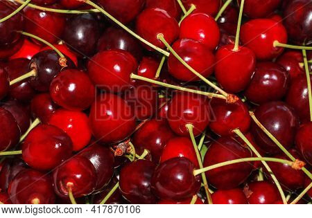 Close-up Of A Pile Of Ripe Cherries With Stalks . Background Of Ripe Cherries