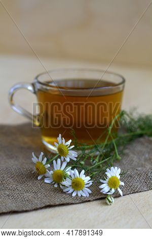 Bouquet Of Chamomile Flowers With Glass Cup Of Tea. Hot Drinks. Mug Of Chamomile Tea On Sackcloth. W