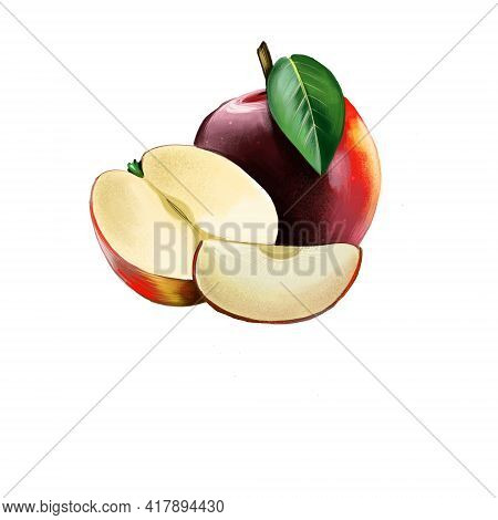 Red Apple On White Background. Half Of Apple And Slice. Apple Tree Malus Pumila Deciduous Tree In Th
