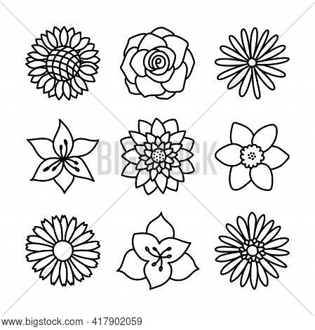 Flowers. Doodle Vector Set. Hand Drawn Line Sketch Floral Collection. Chamomile, Rose, Sunflower, As