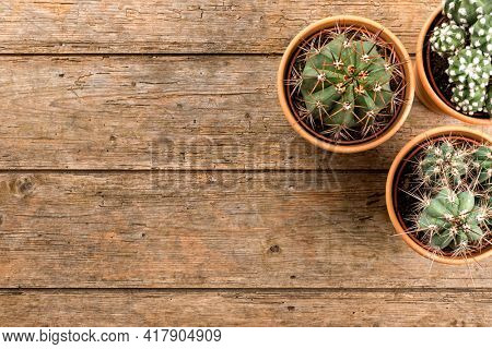 Three cactus plants in terra cotta flower pots on wooden table, top view with copy space