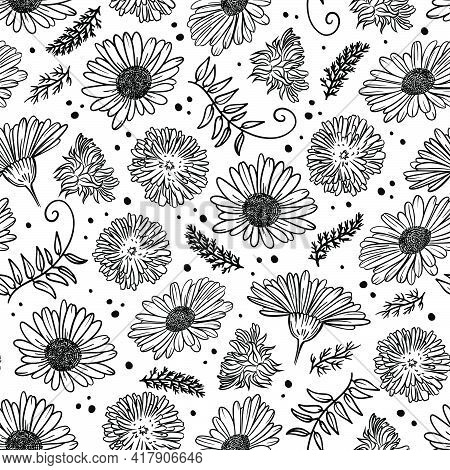 Chamomile And Dandelion Monochrome Floral Sketch With Flower Grass And Bud On White Background Botan