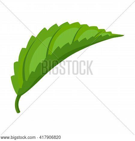 Mint Leaf Cartoon Vector Icon.cartoon Vector Illustration Fresh Peppermint. Isolated Illustration Of