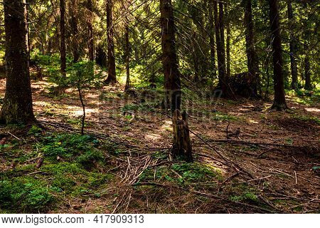 View Through Forest Trees, Sunlights Over The Mountain Forest Details