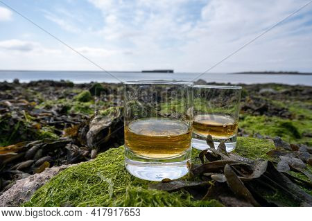 Tasting Of Single Malt Or Blended Scotch Whisky And Seabed At Low Tide With Algae, Stones And Oyster