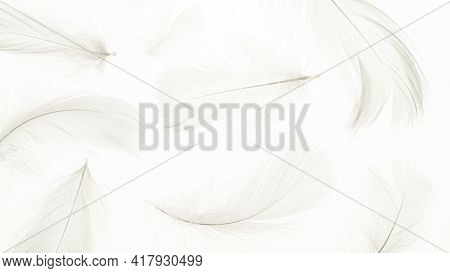 Feather Macro Pattern. Multicoloured Pastel Angel Feather Closeup Texture On White Background In Mac