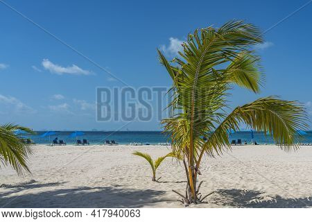 White Sand Beach With Young Palm Trees In Isla Mujeres. Cancun, Mexico