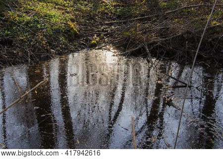 A Small Swamp In The Forest, The Formation Of Swamps, Ecology.