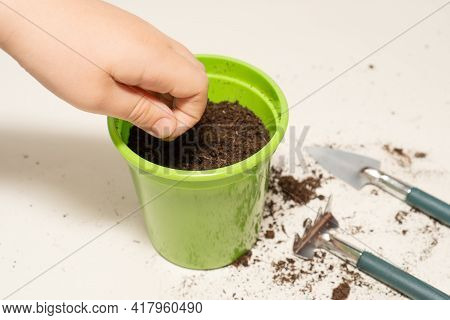 Hand Of A Child Planting Seeds In A Pot Of Earth. Botany For The Little Ones. Gardening At Home Conc
