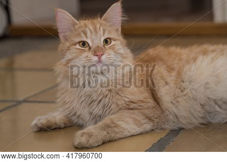 Red Cat Is Frightened - Frightening Look