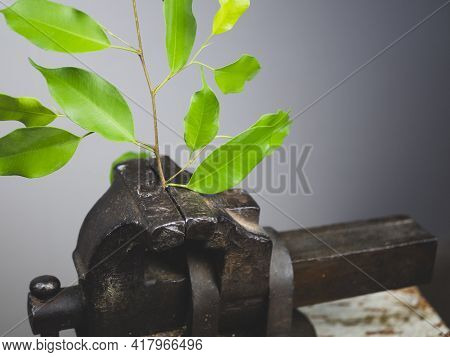 Green Plant Is Clamped In Rusty Vice. Nature Versus Industry. Concept Of Environmental Problems, Adv