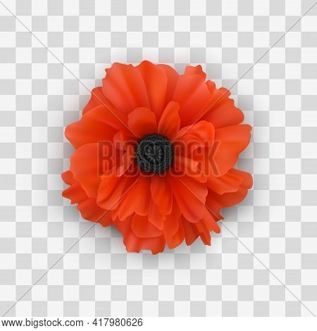 Poppy Flower Close-up With Shadow, Isolated On Checkered Background. Decorative Design Element. Real