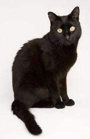 kleine schwarze Katze 01