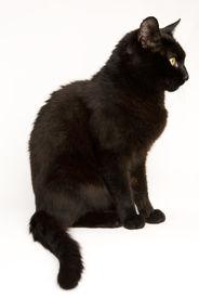 kleine schwarze Katze 03
