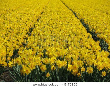 Blumen-Feld