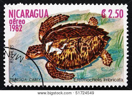 Postage Stamp Nicaragua 1982 The Hawksbill Sea Turtle