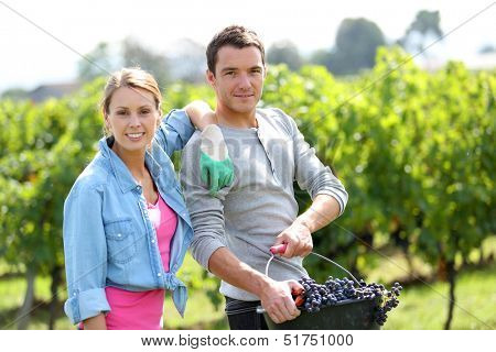 Cheerful winegrowers standing in vine rows