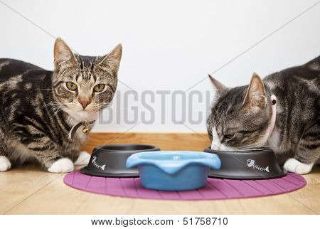 Close up of Cats eating