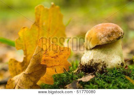 Mushroom And Leaves