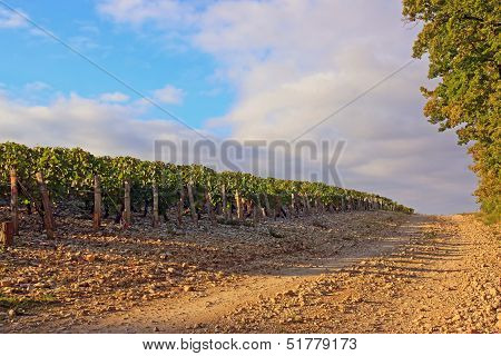 Rocky way near vineyards  Burgundy France