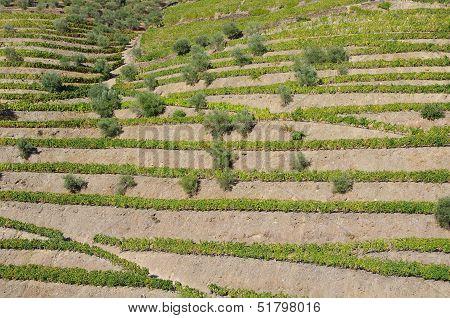 Douro Valley Terraces