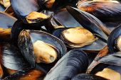 Closeup of big group steamed fresh mussels. poster