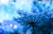 Wildflower background in beautiful blue tones with bokeh lights poster