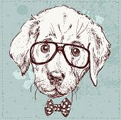 Cute fashion Hipster Animals . pets set of vector icons poster