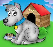 Grey dog in front of kennel - color illustration. poster