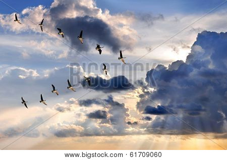 Group of Canadian geese flying in V-formation over sunburst