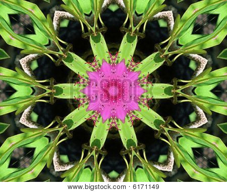 Catawba Rhododendron Kaleidoscope
