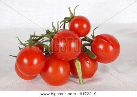 Tomato family