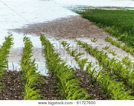 flood of 2013. austria. flows and floods in agriculture