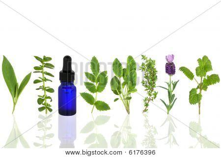 Medicinal And Culinary Herbs