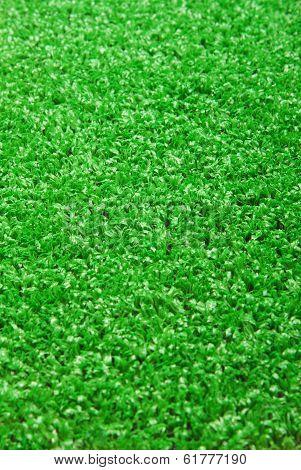 artificial grass astroturf