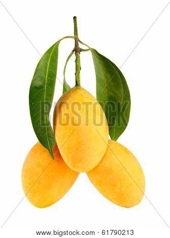 Exotic Thai Fruit. Maprang Marian plum Gandaria Marian mango Plum mango.