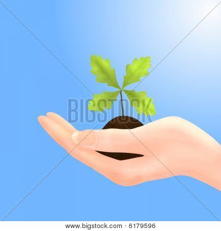 Oak Sapling In Hand With Blue Sky